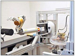 Обезьяну научили контролировать роботизированную руку силой мысли