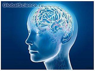 Ученые доказали что у человека птичьи мозги