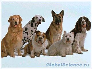 Різноманітність порід собак обумовлено всього кількома генами