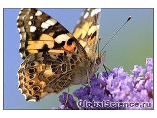 Бабочки снова порхают в доме Черчеля