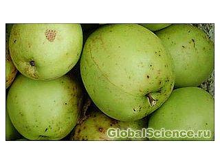 Генетики взломали ДНК яблока