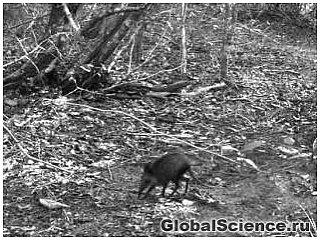 Загадочный слон-землеройка обнаружен в африканском лесу