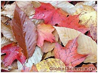 Почему обострение аллергии происходит осенью?