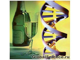 Ученые обнаружили ген, связанный с алкоголизмом