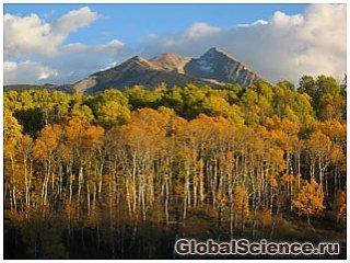 Ученые: растения спасут мир от загрязнения воздуха
