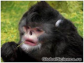 Обнаружен новый вид курносой обезьяны, которая чихает в дождь