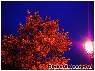 Светящиеся деревья заменят уличное освещение