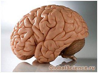 Идентифицирована часть мозга, подавляющая инстинкт