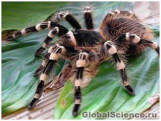 Люди не боятся пауков и змей от рождения
