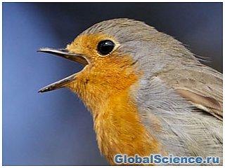 Птицы могут удерживать квантовую сцепленность