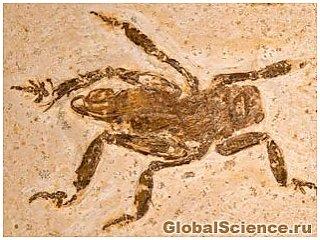 Ископаемое редкого насекомого открывает секреты эволюции