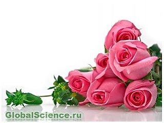 Розы с геном сельдерея: новый метод самозащиты для цветов