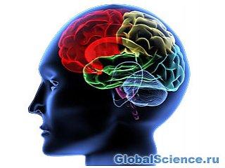 Изучение второго языка защитит от Альцгеймера