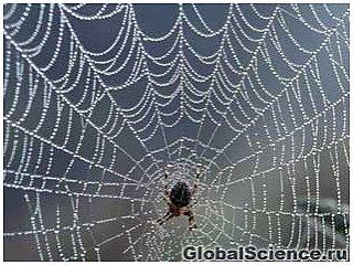 Ученые распутывают загадочные механизмы паутины