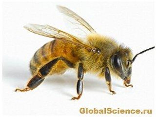 ООН обеспокоена огромным сокращением количества пчел в мире