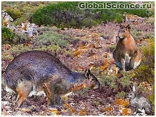 На острове Минорка найдены ископаемые гигантского кролика