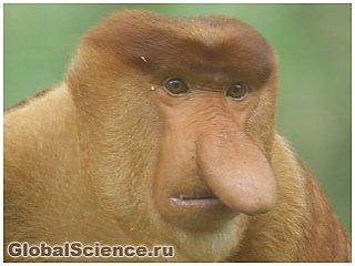 Ученые обнаружили обезьяну с повадками коровы