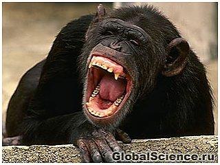 Зевота заразительна не только среди людей