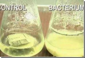 Биотопливный прорыв: этанол можно делать из мусора!