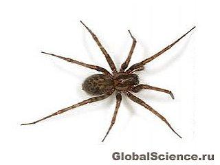 Следы самого большого паука обнаружены в Китае