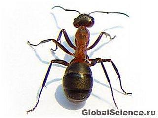 Как муравьи переживают потоп? Они создают плавательное средство.