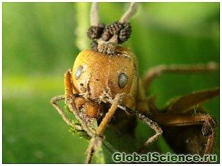 Шокирующие факты зомбирования муравьев грибком