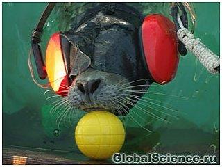 Тюлени способны распознать форму предмета своими усами