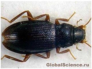 Новые эндемические жучки обнаружены на Иберийском полуострове