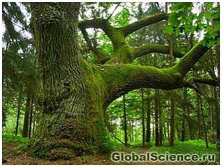 Бактерии на деревьях способствуют разрастанию лесов