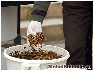 Личинки мух будуть використані для видалення органічних відходів