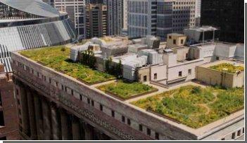 На крышах домов Чикаго растут сады