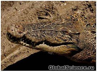 Ученые Малайзии обнаружили на острове Борнео морского крокодила