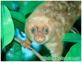 1060 новых видов живых организмов обнаружено в Новой Гвинее