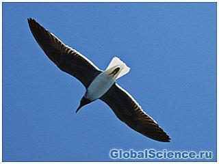 Новая теория возникновения птиц