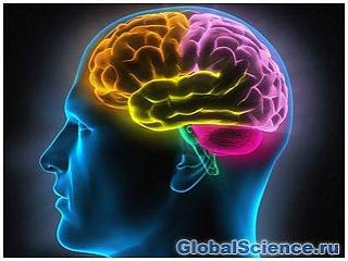 Достиг ли наш мозг предела своего развития?