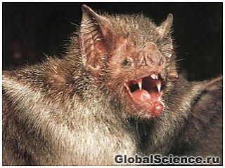 В США зарегистрирован первый смертельный случай от укуса летучей мыши