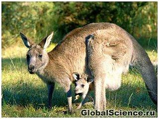 Антимикробные вещества австралийских млекопитающих лучше всех антибиотиков