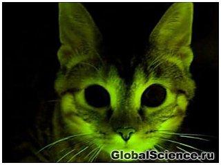 Светящиеся кошки помогут в борьбе со СПИДом и другими болезнями