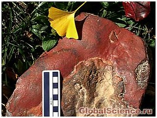 Викопні новонародженого динозавра були виявлені в Меріленді