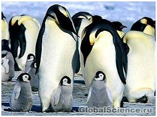 Пингвины тоже способны на преступление