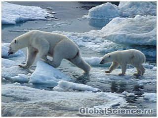Животные начинают уменьшаться в размерах в связи с глобальным потеплением