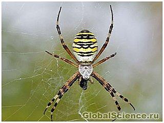 Биологами были найдены ядовитые паучьи сети, которые отпугивают муравьёв
