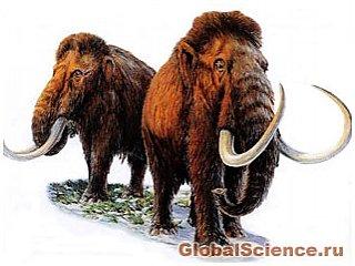 Вчені Росії та Японії збираються клонувати мамонта