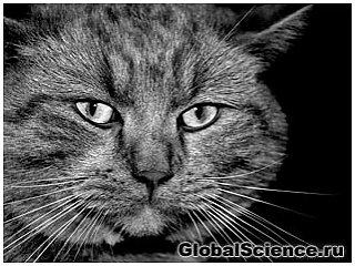 Почему квантовых котов так сложно увидеть?