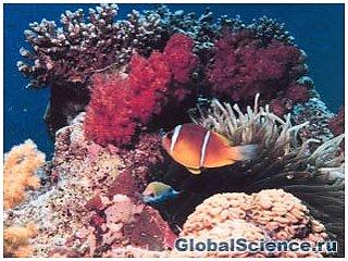 От инвалидности человека спасут коралловые импланты