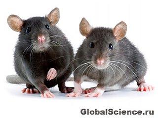 На Филиппинах вспыхнула эпидемия крысиной лихорадки