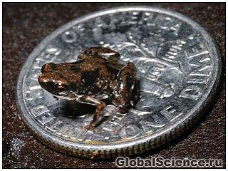 Учеными обнаружено самое маленькое позвоночное животное на земле