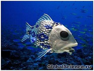 Тонны СО2 опьяняют рыб в мировом океане