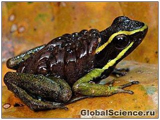 В джунглях Суринама обнаружили 46 новых видов животных