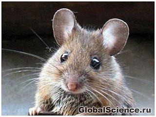 Голодание лечит рак у мышей не хуже химиотерапии